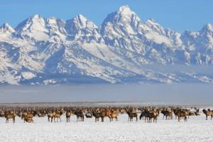 10 Dicas em Jackson Hole – Snowonline.com